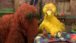 Big Bird's Nest Sale